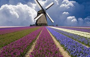 荷兰留学优势盘点