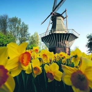 2019年荷兰留学优势分析