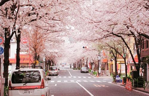 申请日本语言学校的要点和注意事项