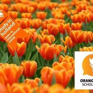荷兰留学有哪些奖学金项目