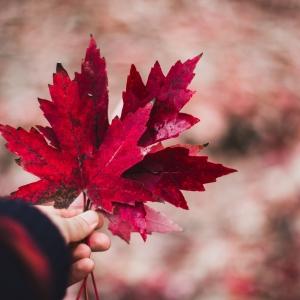 选择加拿大留学的五点优势