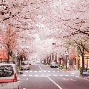 日本留学的优势有哪些
