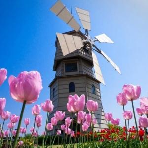 这篇文章告诉你为什么要选择荷兰留学?